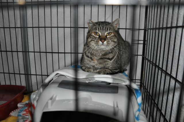 Farrah, the feral female, was spayed on January 27. She spent 15 days recuperating in my garage. She was quite stoic most of the time.