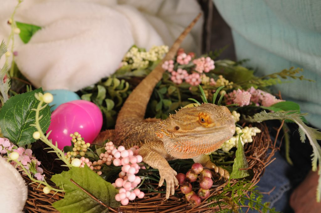 EASTER_BUNNY_PICTURES_2012_001