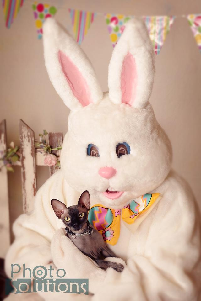 easter_bunny_pictures_2013