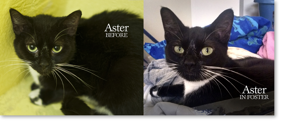 Cat Before & After Foster