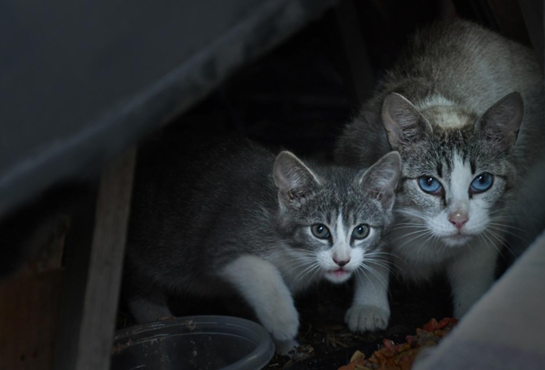 DSC_0412 Feral Mom and Kitten_1024