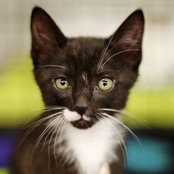 Sylvester has been adopted