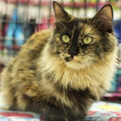 Rosemary has been Adopted!
