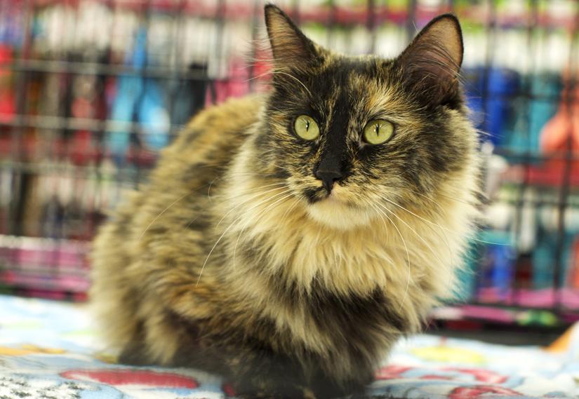 London Adopt Cat