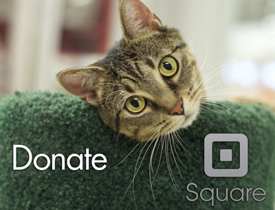 Donate securely with Square