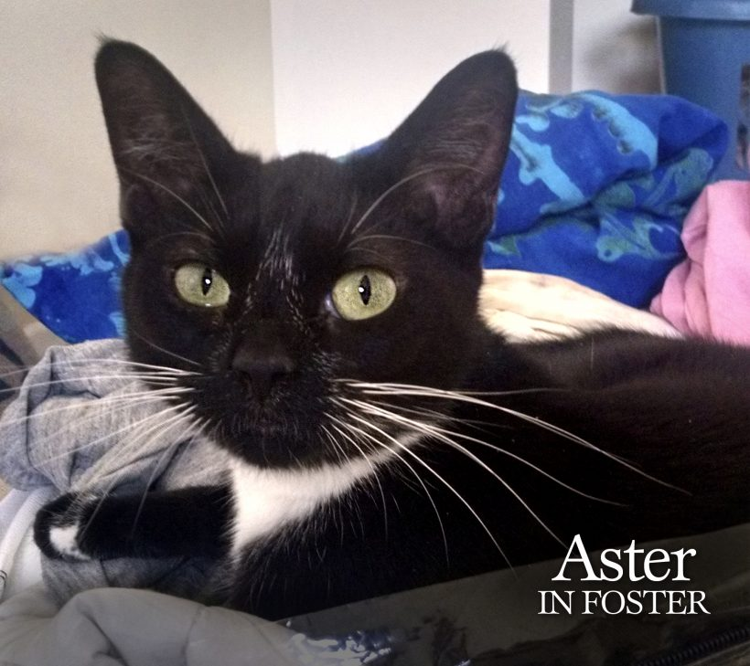 Foster volunteer saves the day!