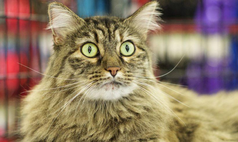 Nappy Catz