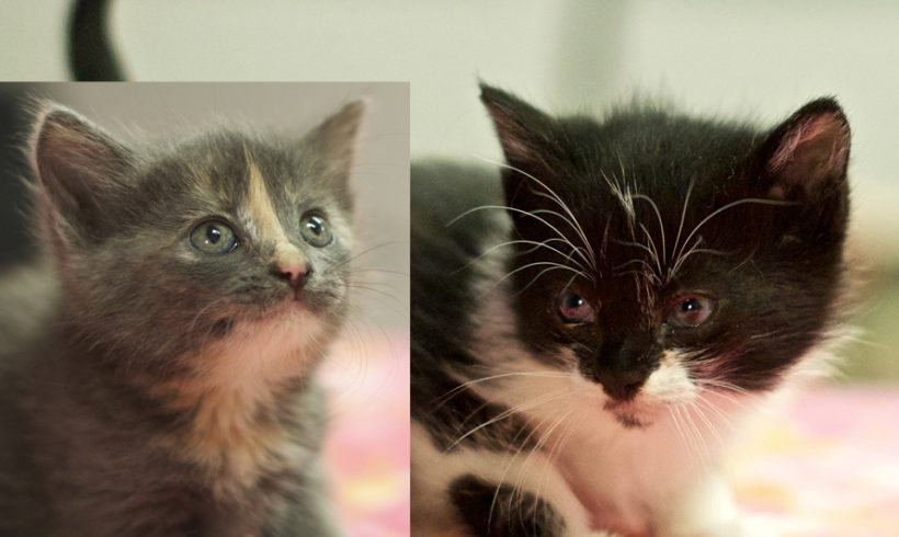 Two Sisters have been Adopted!