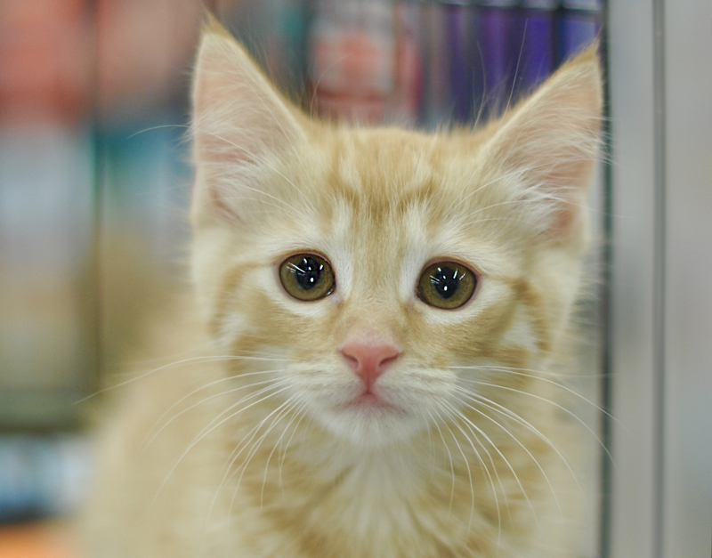 Kittens - Pet Paw-See