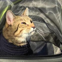 Mr. Wobbles is a unique fundraising cat